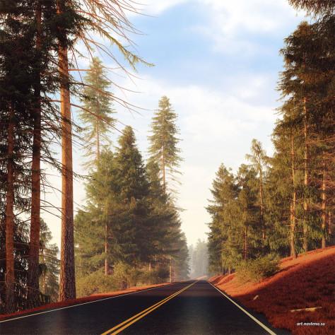 Сквозь хвойный лес